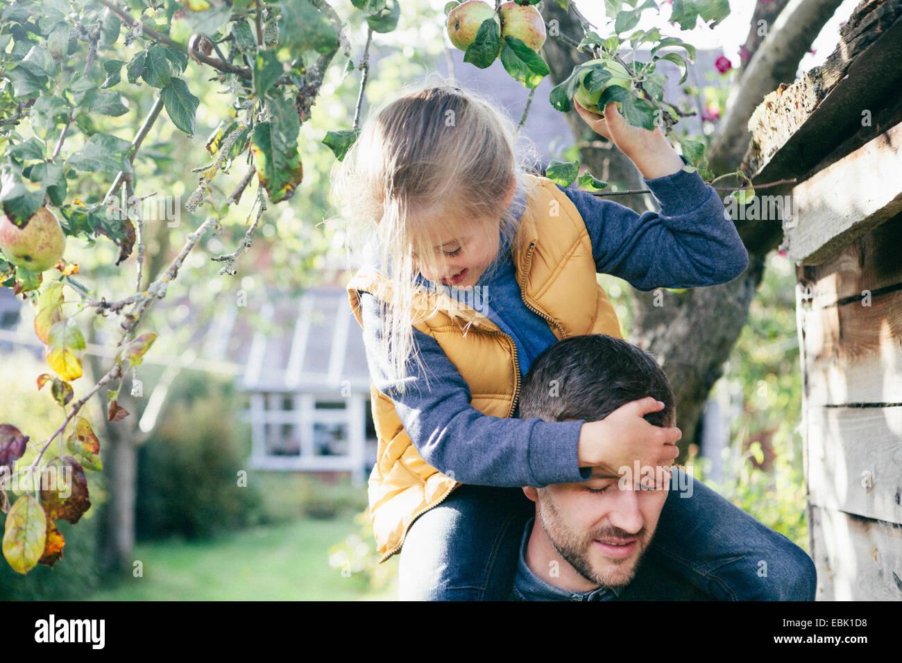 Tochter auf Vaters Schultern, Apfel vom Baum pflücken Stockbild