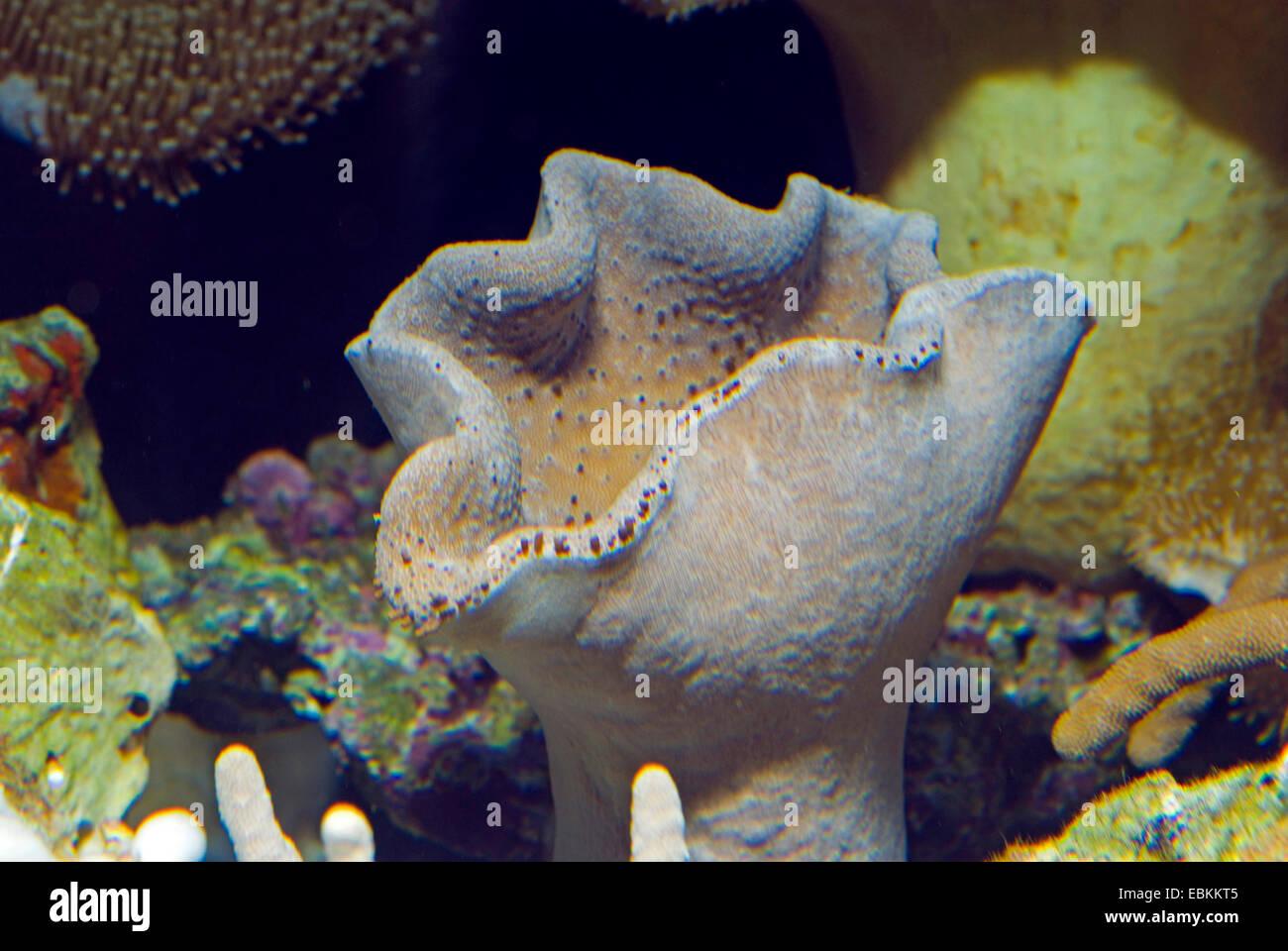 Sarcophyton aquarium stockfotos sarcophyton aquarium bilder alamy - Aquarium hintergrund ausdrucken ...