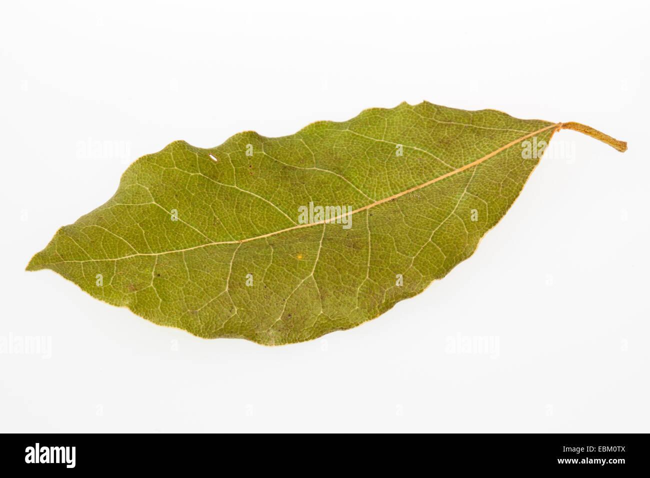 süßer Lorbeer, Lorbeerbaum, Sweet Bay (Laurus Nobilis), getrocknete Blätter von Sweet bay Stockbild