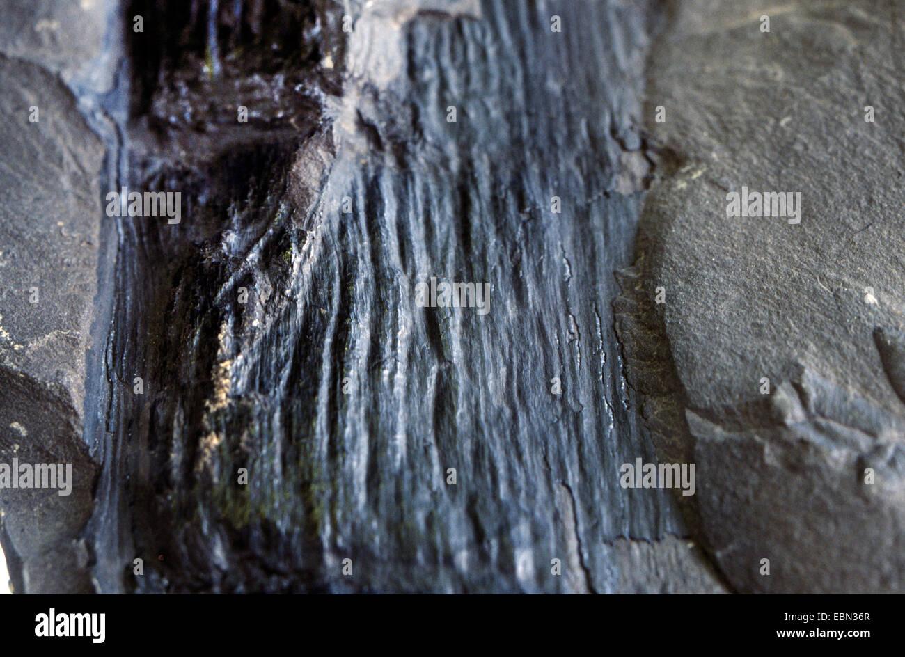 Kann Kohlenstoffdatierung auf Fossilien verwendet werden