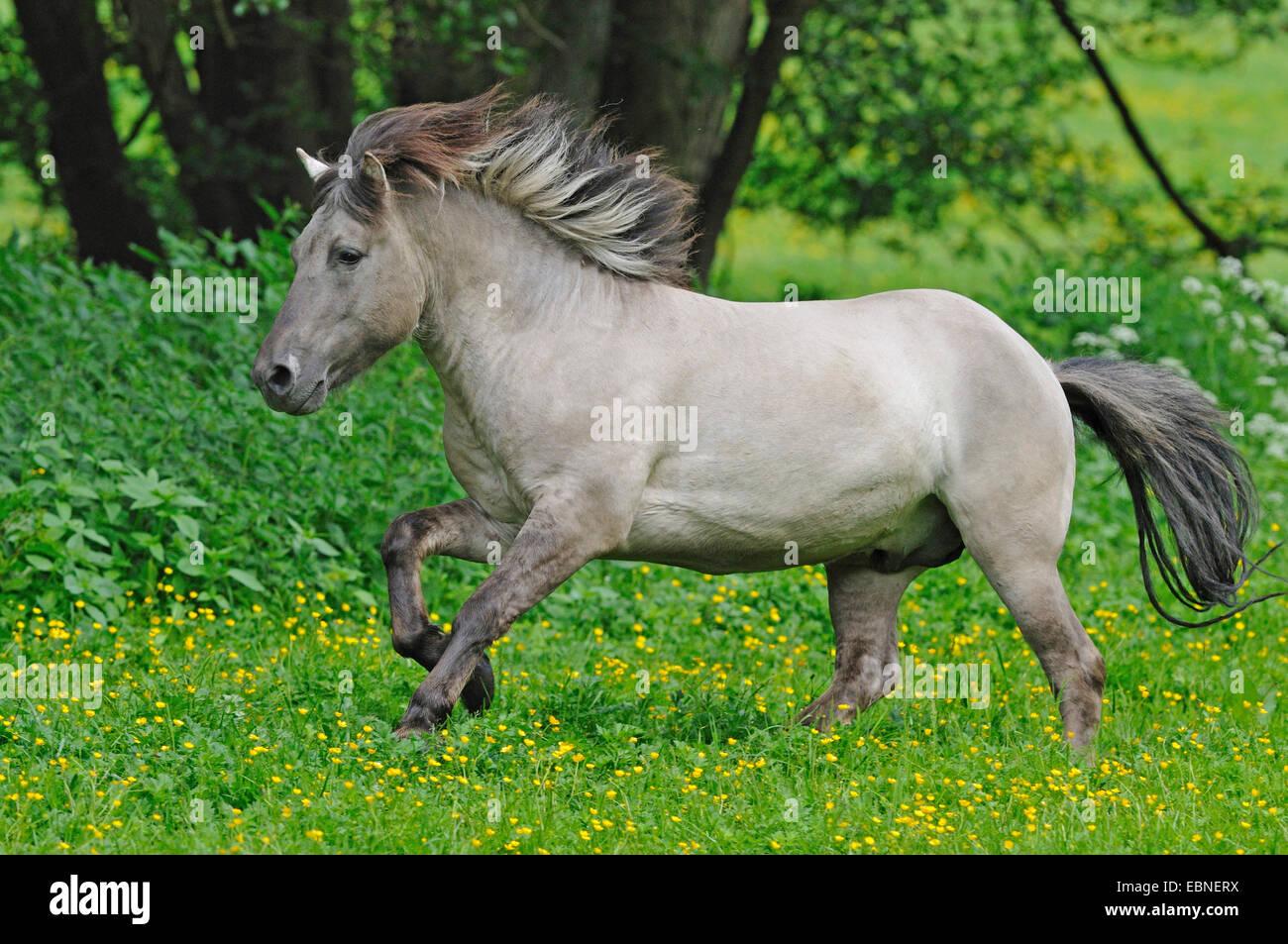 tarpan equus ferus gmelini equus gmelini zur ck durch die kreuzung von verschiedenen. Black Bedroom Furniture Sets. Home Design Ideas