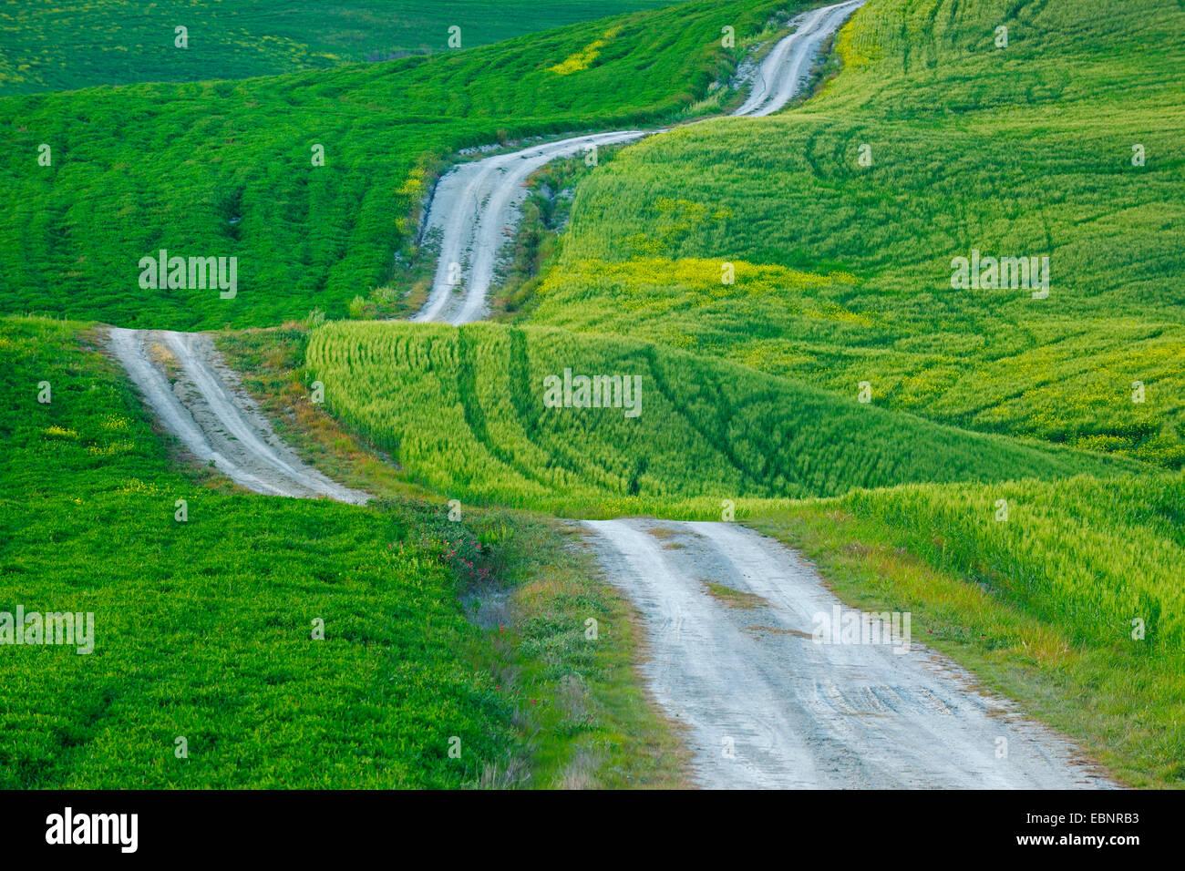 Feldweg Trog hügeligen und grünen Bereich Landschaft, Italien, Toskana, Val d Orcia, San Quirico d Orcia Stockbild