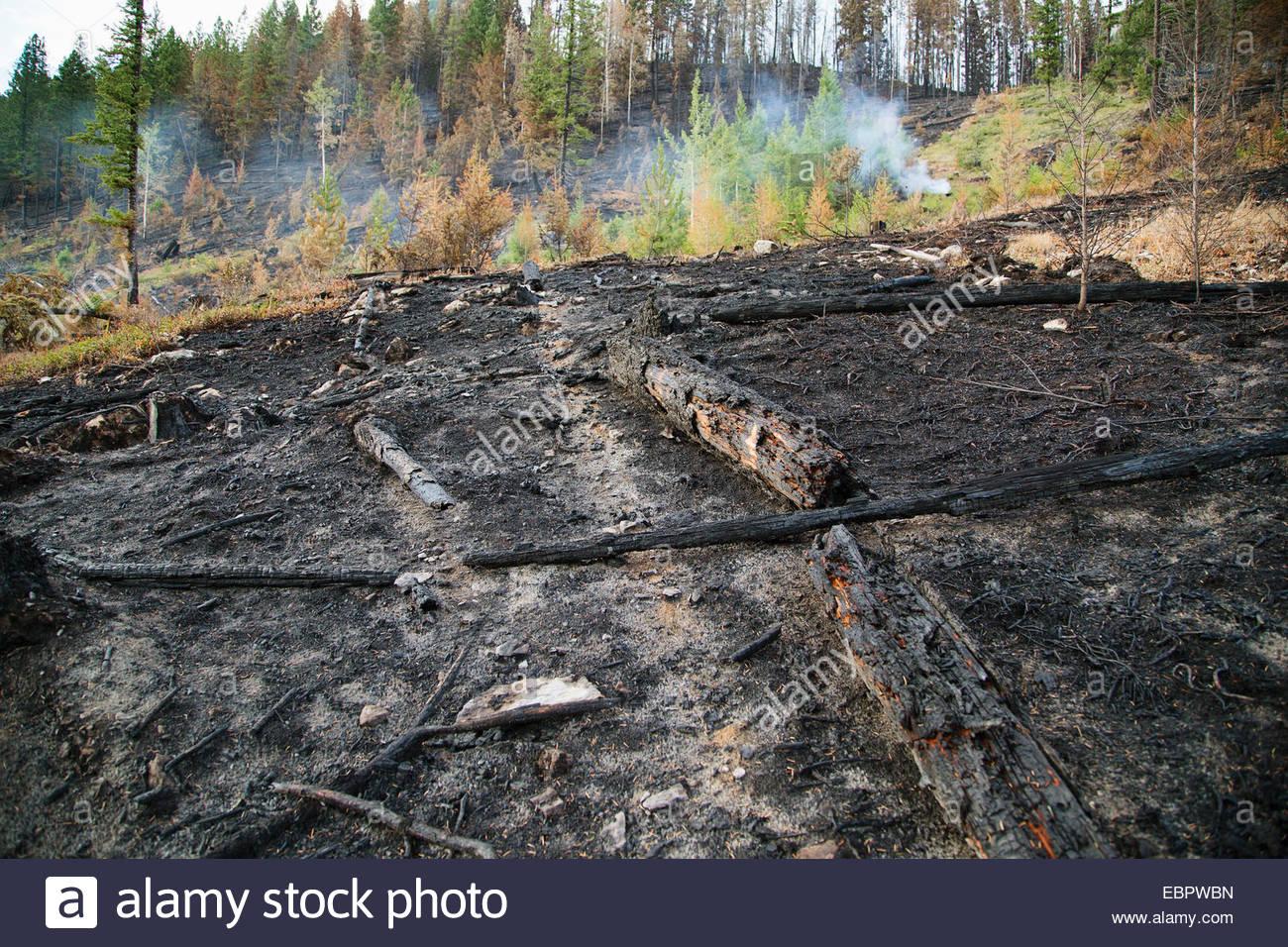 Verbrannten Boden durch Wald Feuer-Schaden Stockfoto