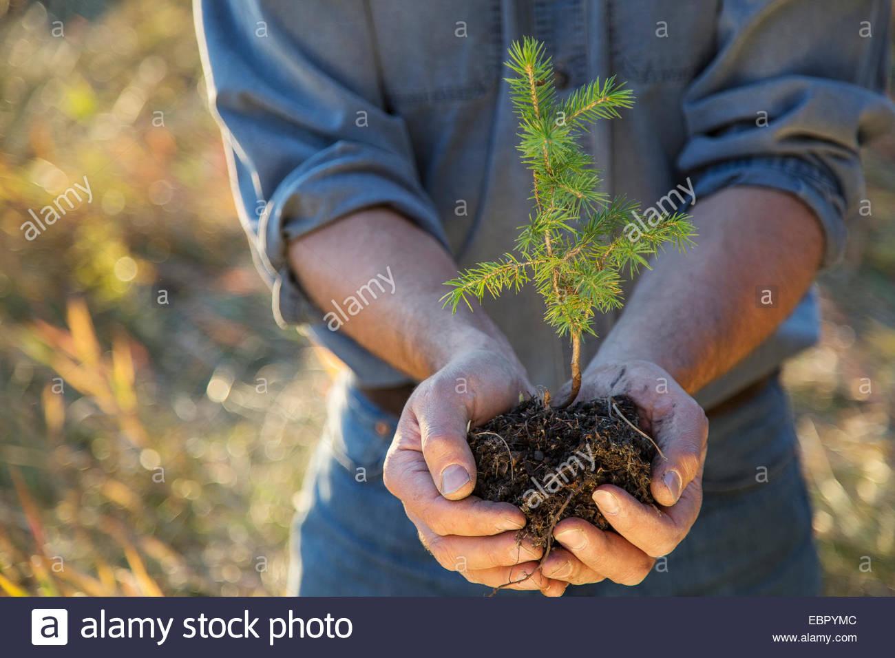 Mann Schröpfen Baum Bäumchen Stockbild