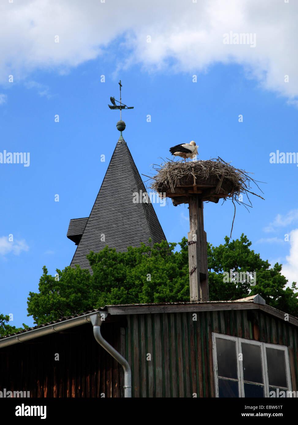 Storchennest, Hitzacker / Elbe, Wendland, Niedersachsen, Deutschland, Europa Stockbild
