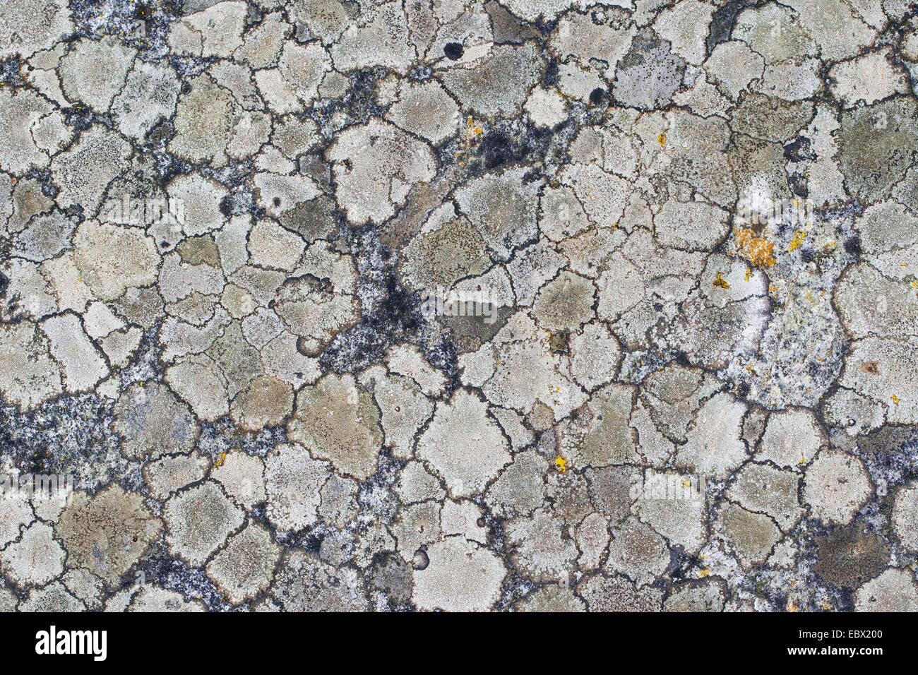 mehrere verschiedene crustose Lichenes auf einem Felsen in den Alpen, Deutschland Stockbild