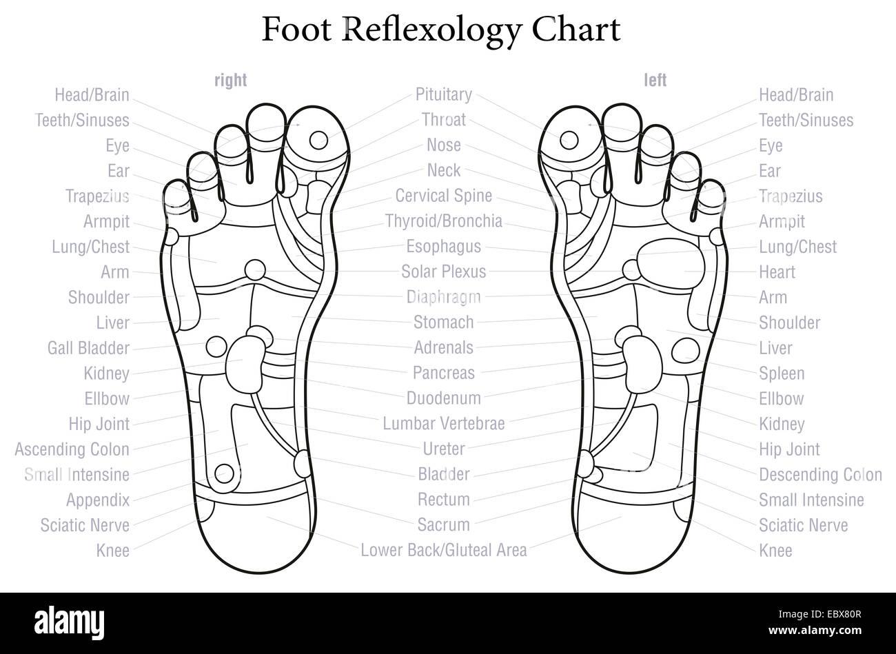 Atemberaubend Fußmuskel Anatomie Diagramm Bilder - Menschliche ...