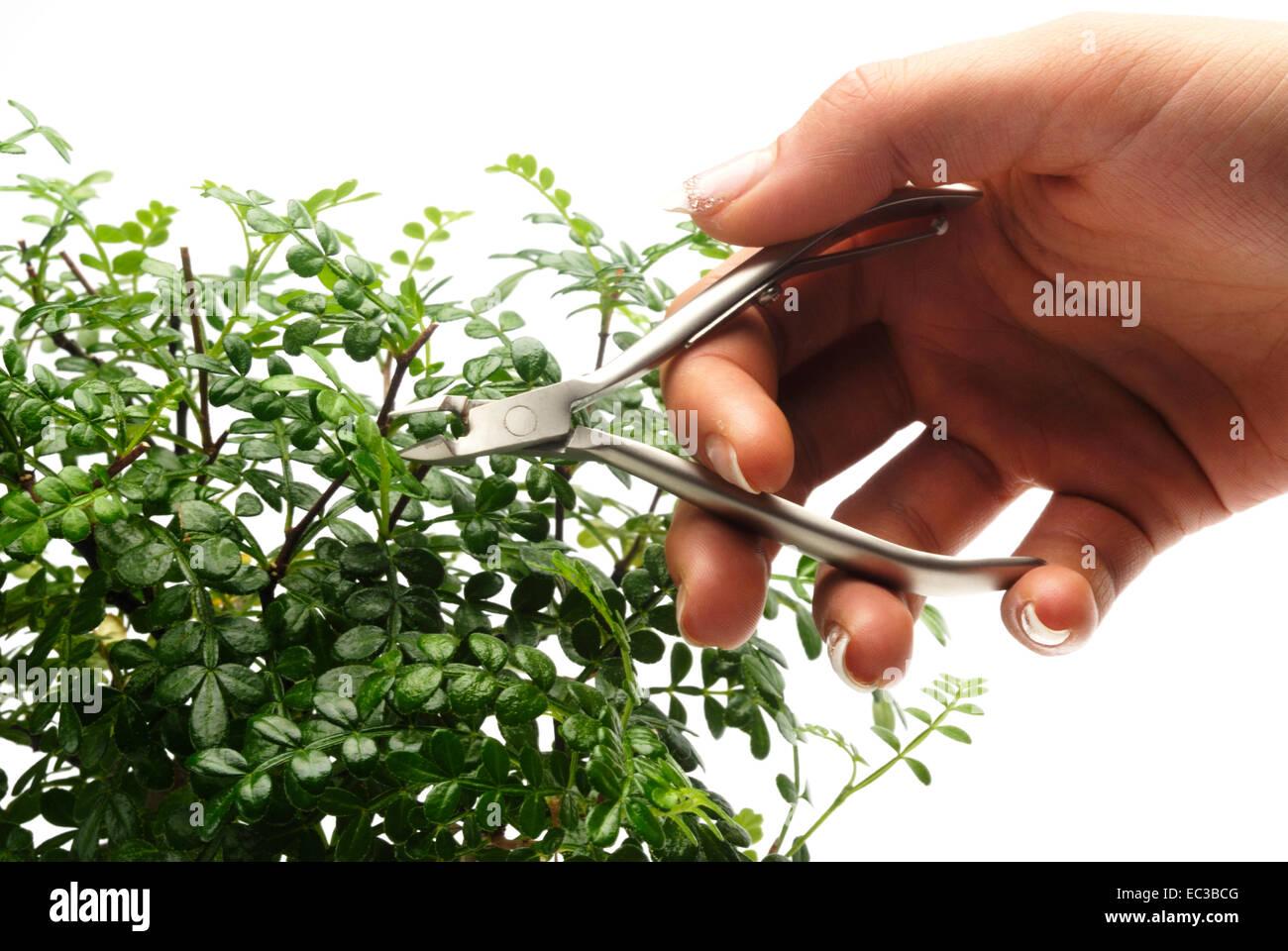 Pflege Von Bonsai Baumen Stockfotos Pflege Von Bonsai Baumen