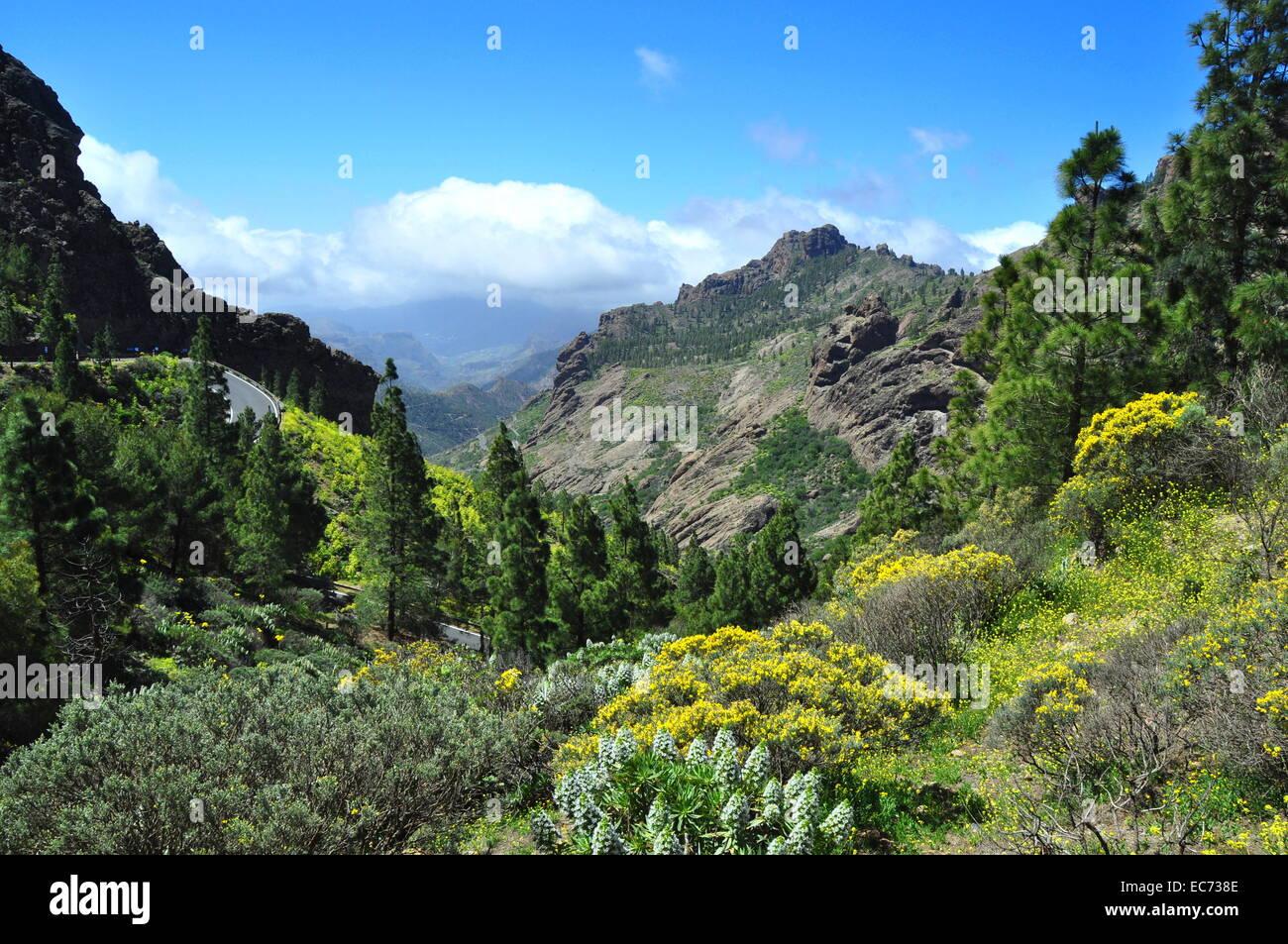 Schöne Landschaft in den Bergen von Gran Canaria, Spanien. Stockbild