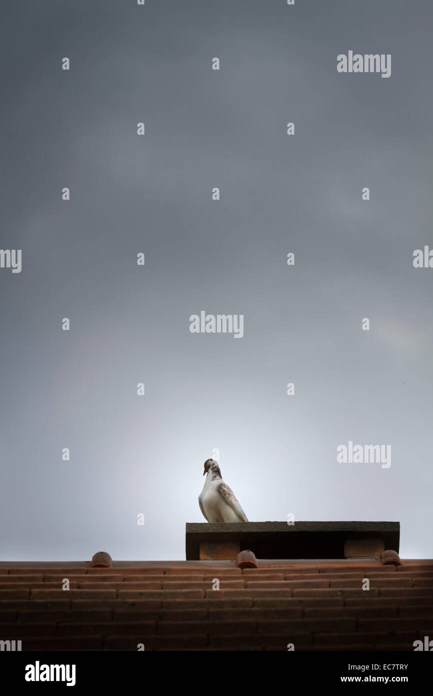 Vogel auf Schornstein Dach Stockbild