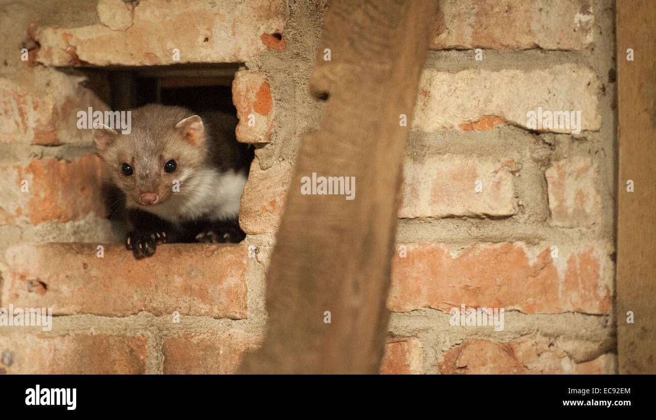 Beste Draht Fuchs Terrier Rettung Midwest Fotos - Elektrische ...