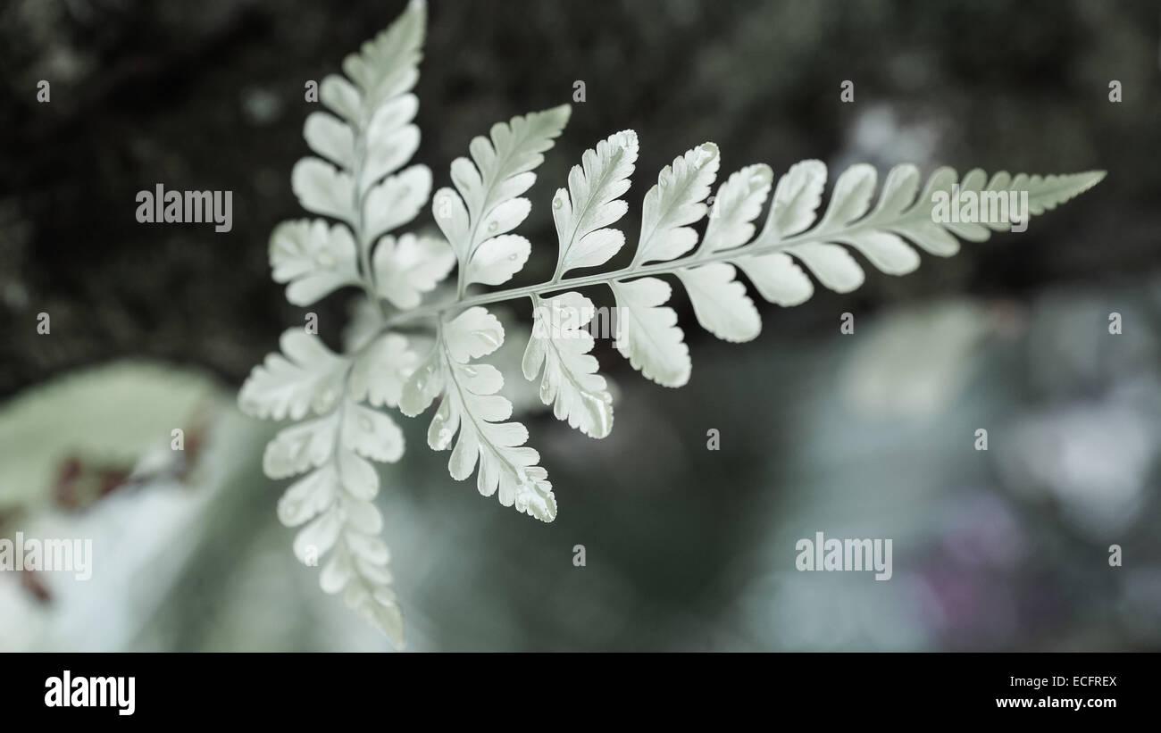 Baum geformten Blatt Stockbild
