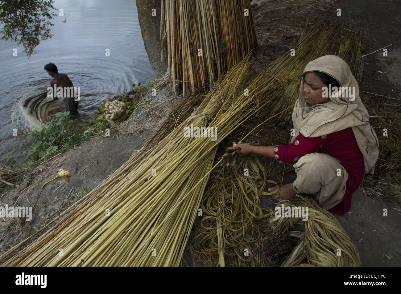 munshigonj bangladesch 14 august 2013 landwirt verarbeitung jute aus jute pflanzen jute in. Black Bedroom Furniture Sets. Home Design Ideas