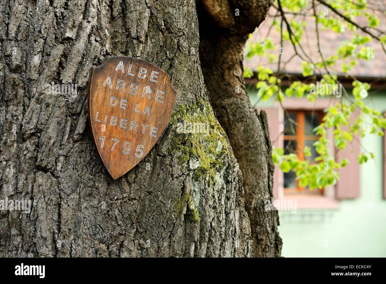 Dame datiert einen Baum