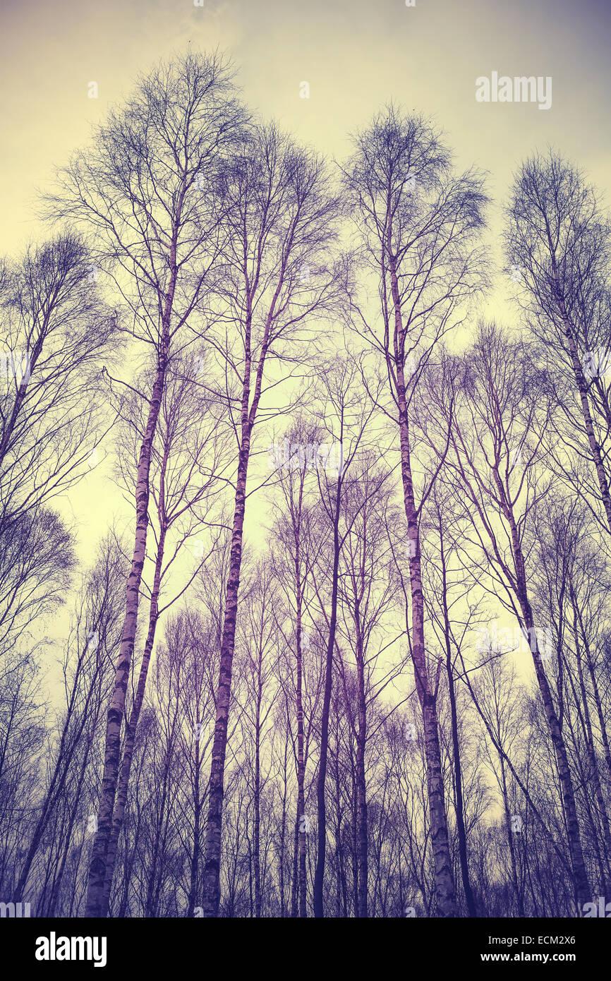 Suchen Sie durch Bäume, gefiltert Retro Hintergrund. Stockbild