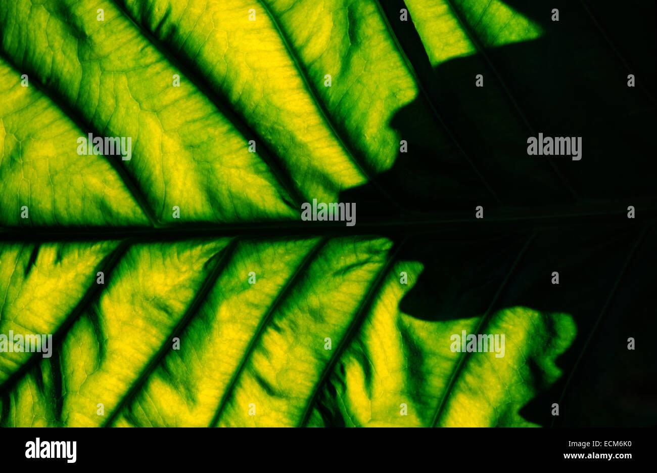 Abstrakte Muster von Schatten und Licht auf hellen grünen tropischen Palmwedel und Blättern. Stockbild