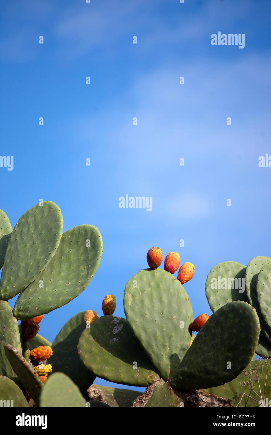 Kaktusfeigen Stockbild
