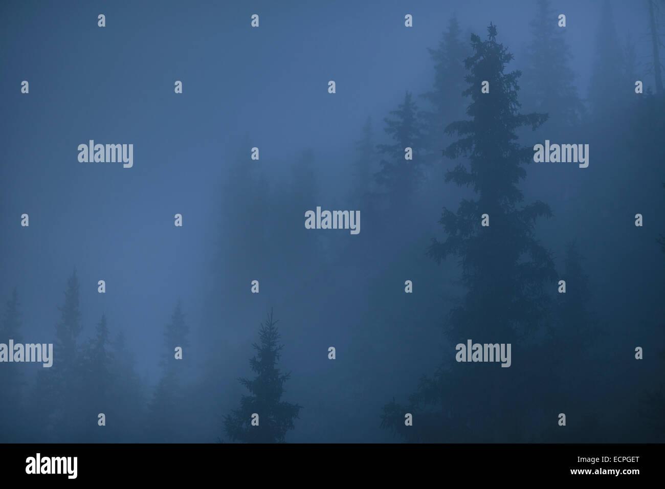 Das Mondlicht leuchtet durch Nebel und die Fichte Baumkronen um Grassi Lakes in Canmore steigen aus dem Nebel in Stockbild