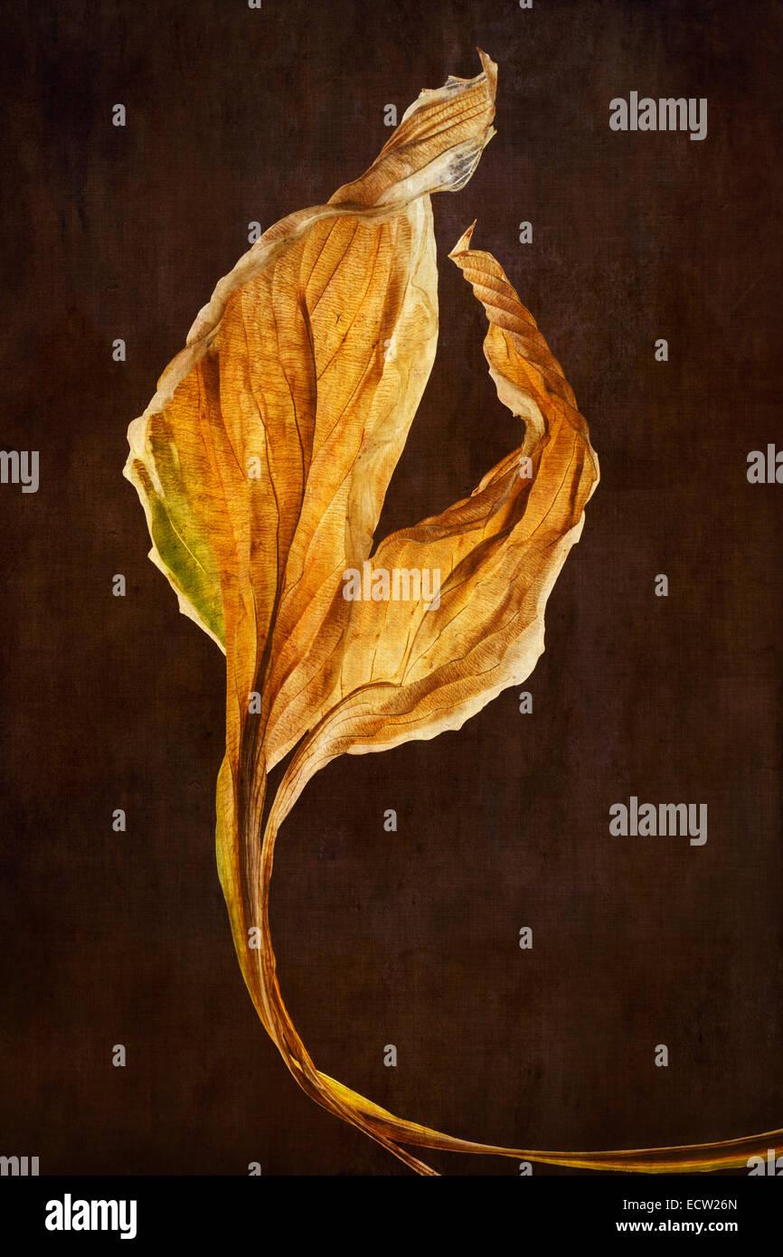Hosta-Blätter mit strukturierten Hintergrund Stockbild