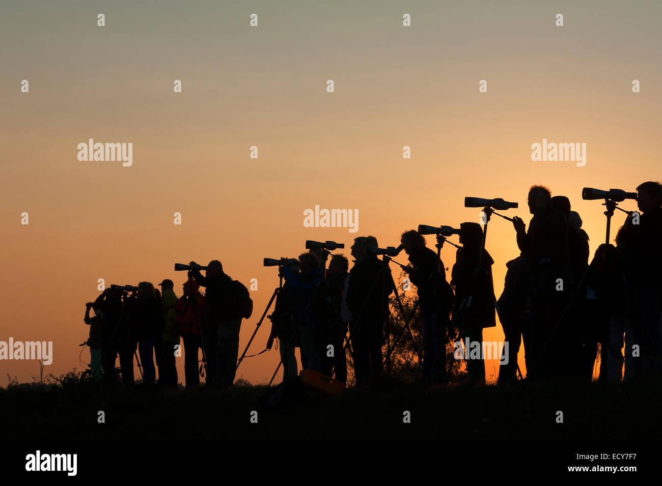 Vogelbeobachtung silhouetten von menschen mit dem fernglas gegen