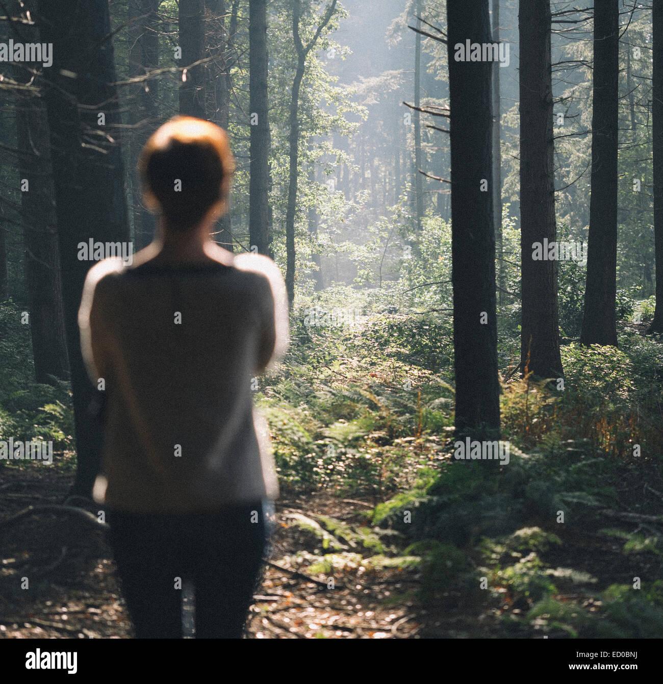 Rückansicht des Frauen starrte in Wald Stockbild