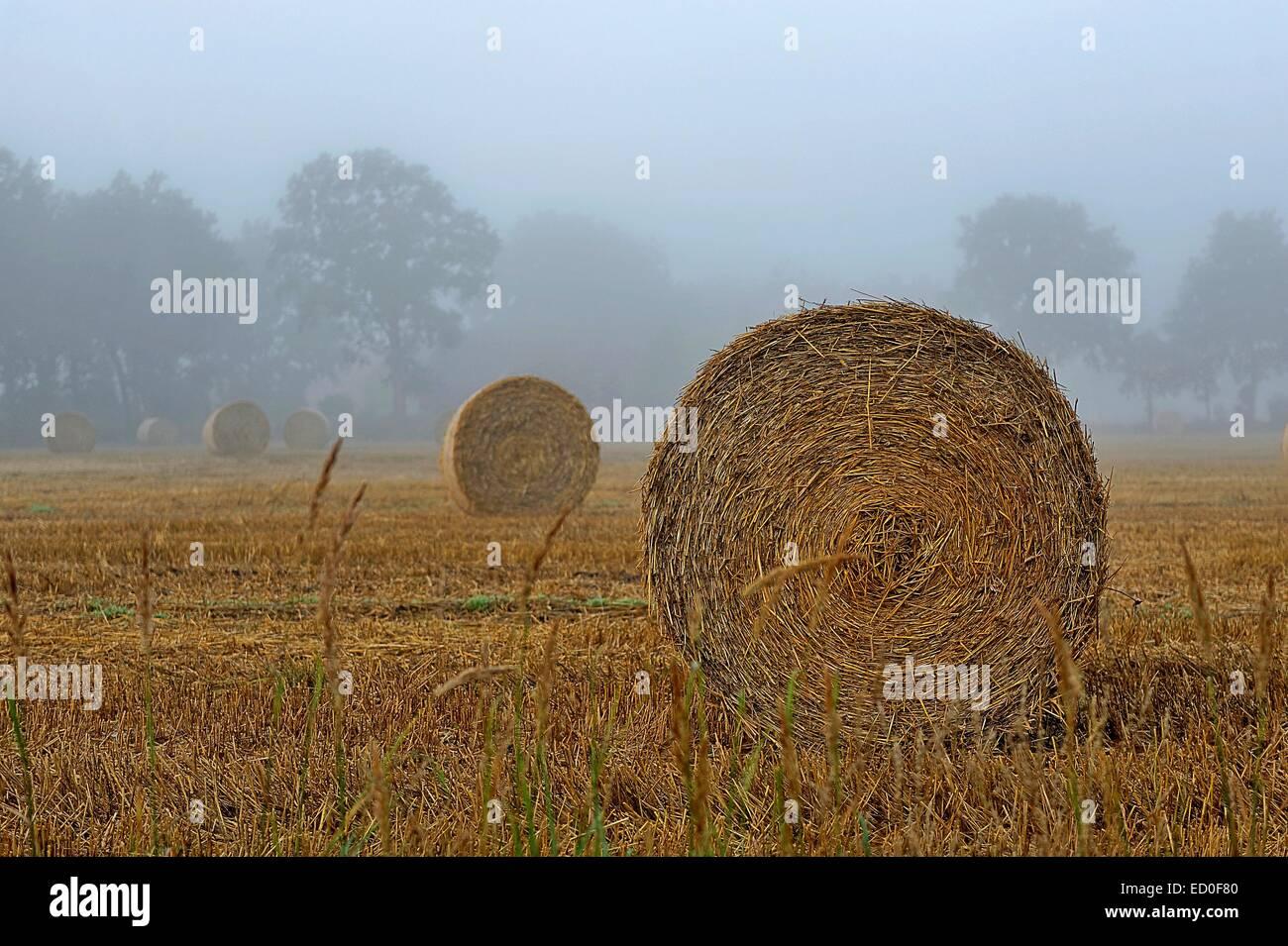 Strohballen auf der Wiese, Ostfriesland, Niedersachsen, Deutschland Stockbild