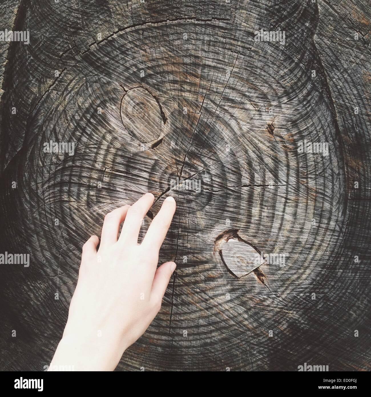 Hand und Baum-Stamm Stockbild