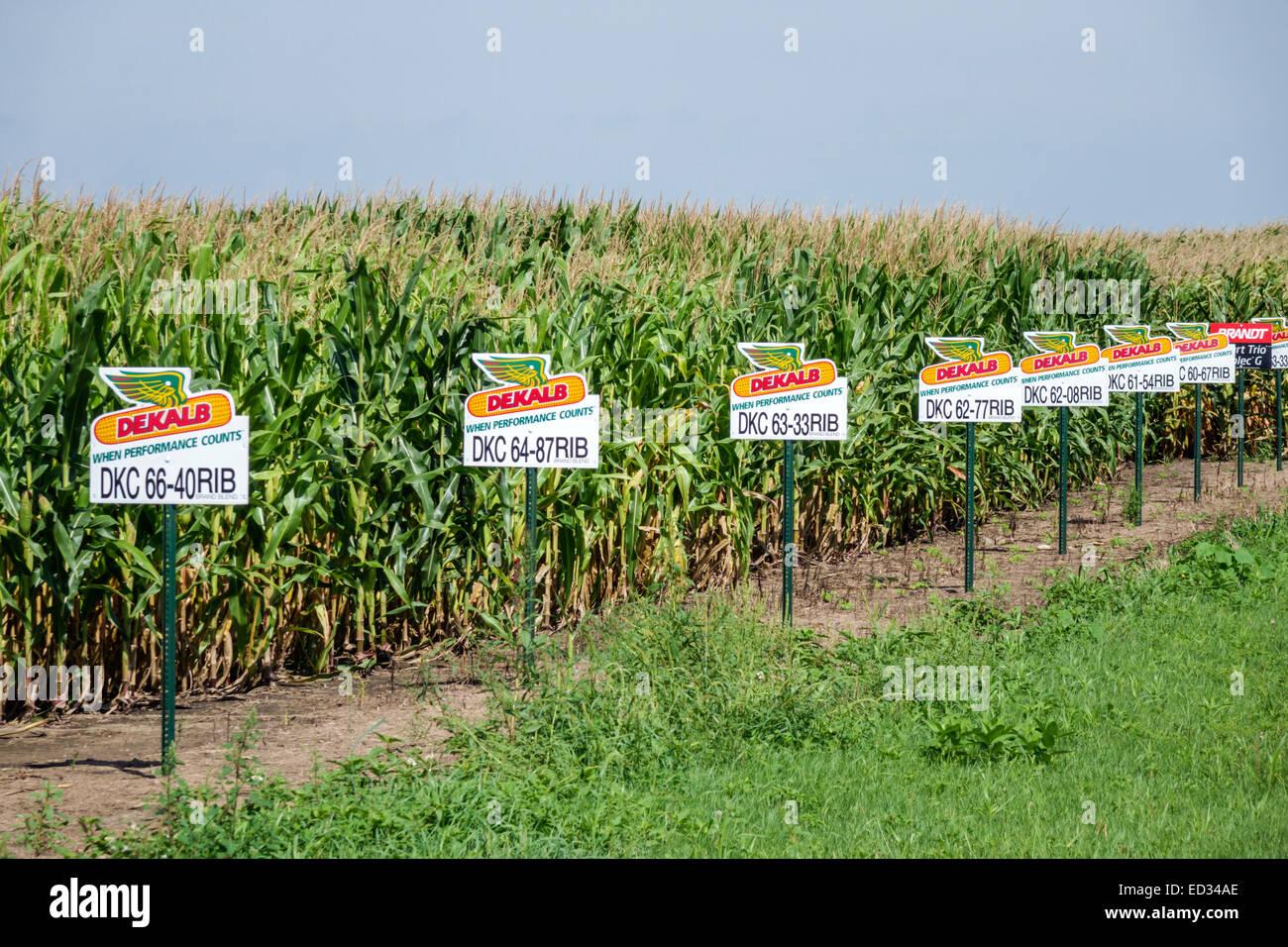 Illinois Sibley Mais Maisfeld unterschreibt Saatgutsorten Marker Stockbild