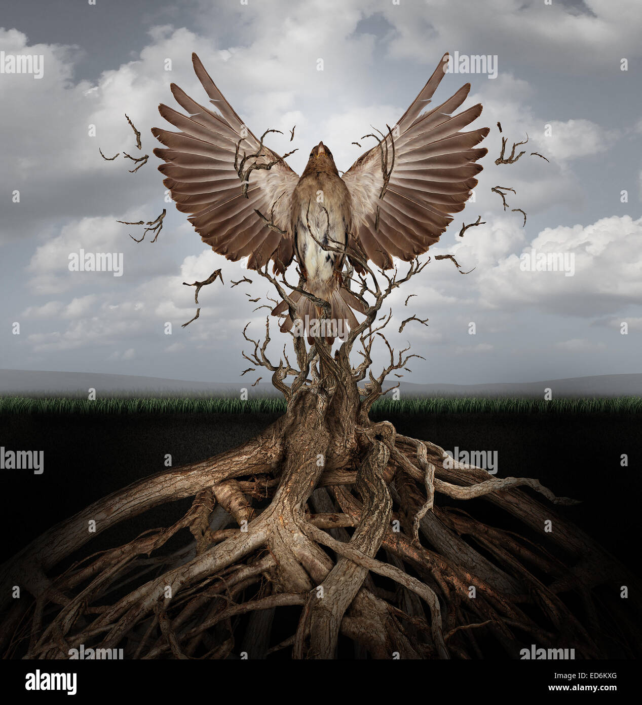 Neues Leben frei wie ein Konzept für Freiheit und macht zu brechen, wie der Aufstieg des Phönix wiedergeboren Stockbild