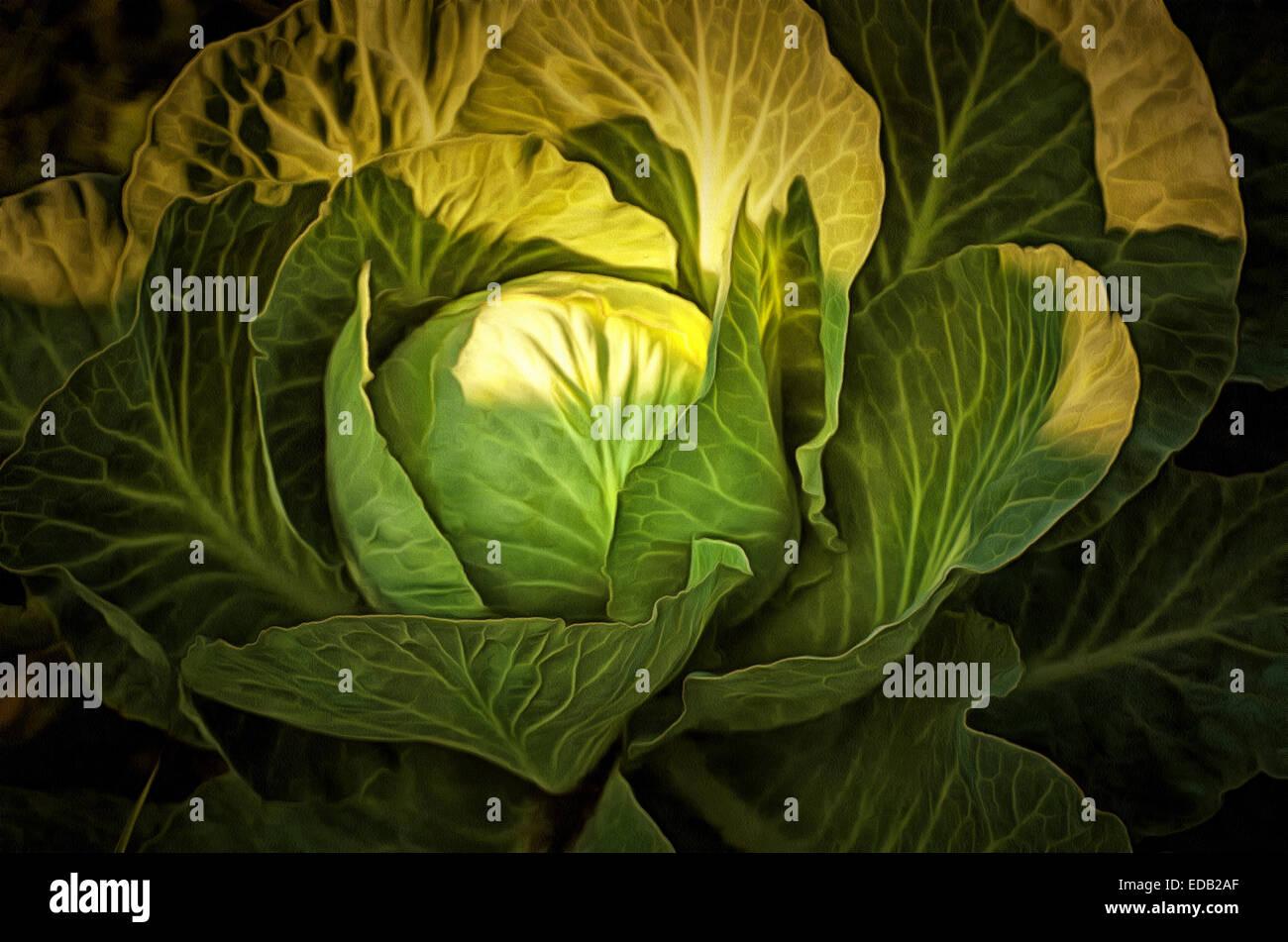 Kunst; Grafiken; Gemüse, Kohl, Malerei Stockfoto, Bild: 77075335 - Alamy