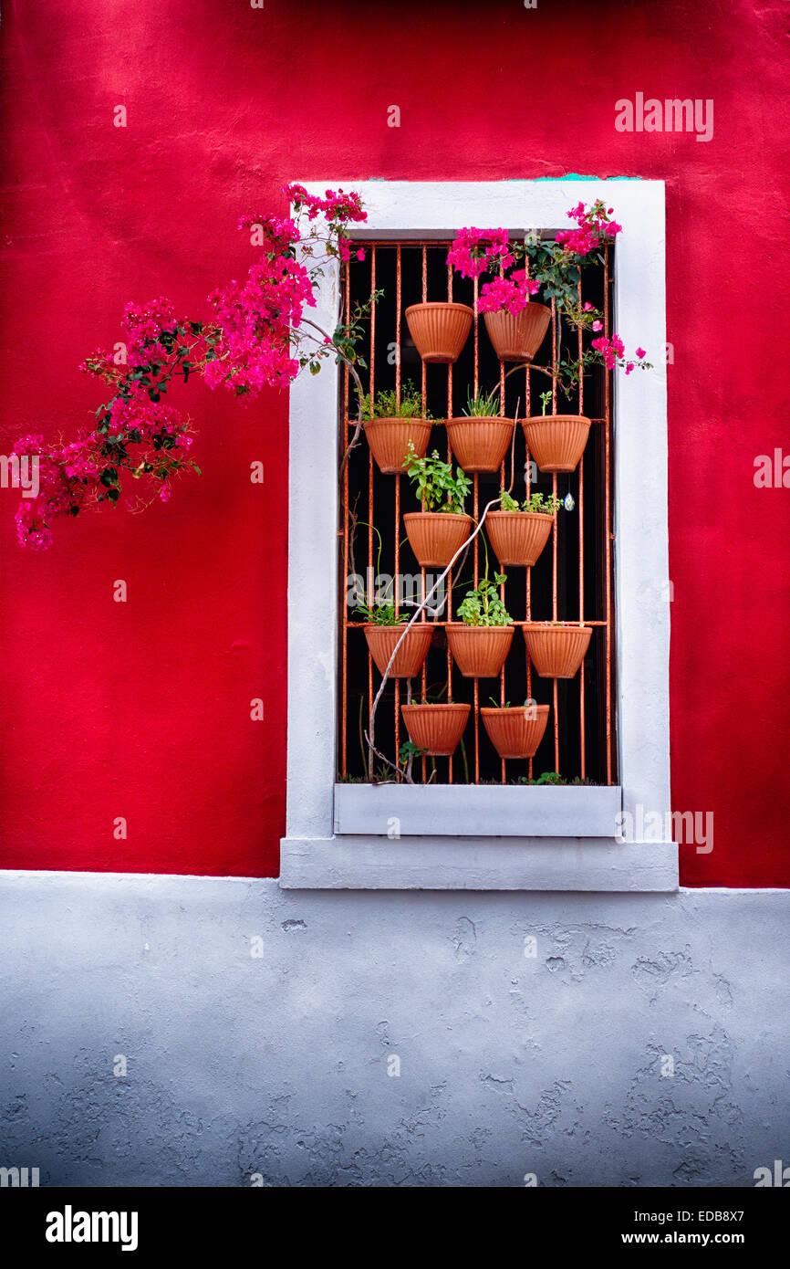 Nahaufnahme der Ansicht von Topfpflanzen Blumen in ein Fenster, Old San Juan, Puerto Rico Stockbild