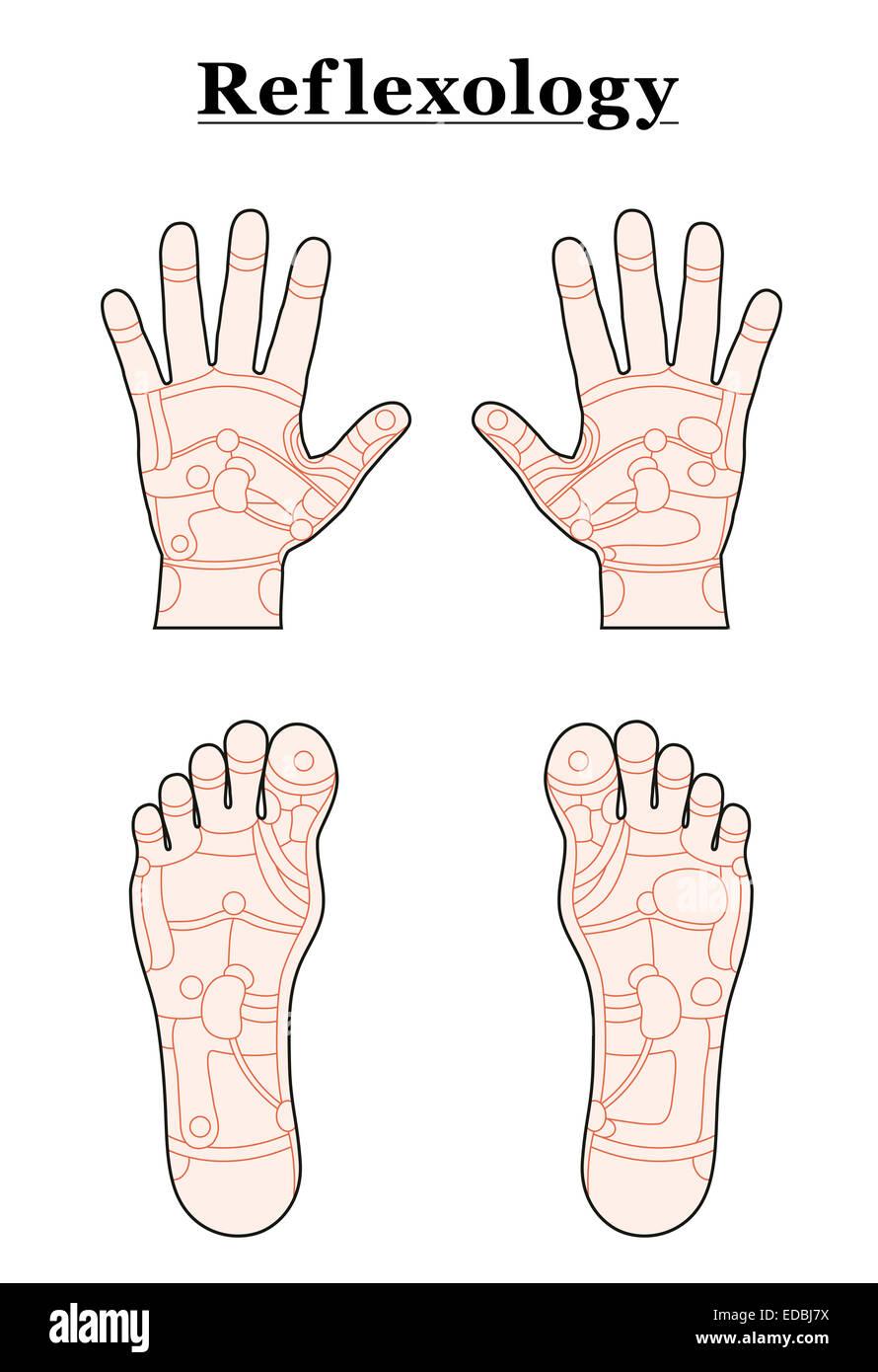 Hände und Füße in den Bereichen Reflexzonenmassage die ...