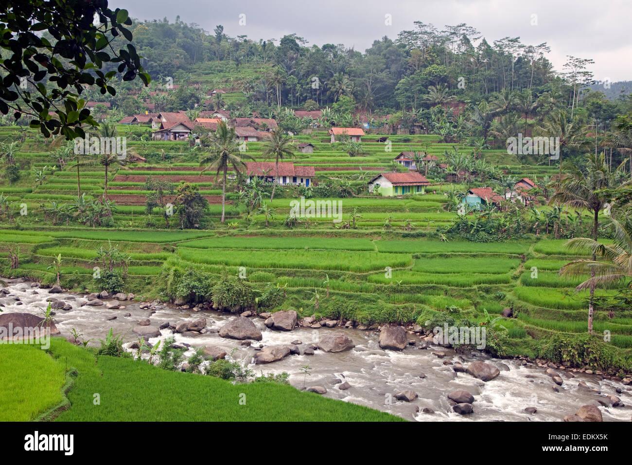 Indonesische ländlichen Dorf und Reis Reisfelder in der Regenzeit, Garut Regency, West-Java, Indonesien Stockbild