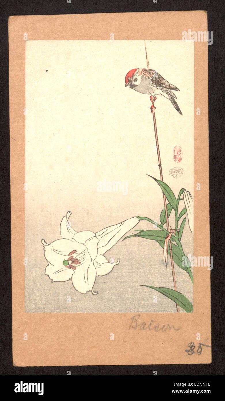 Yuri ni Shokin, kleiner Vogel auf Lily Pflanze Stockfoto