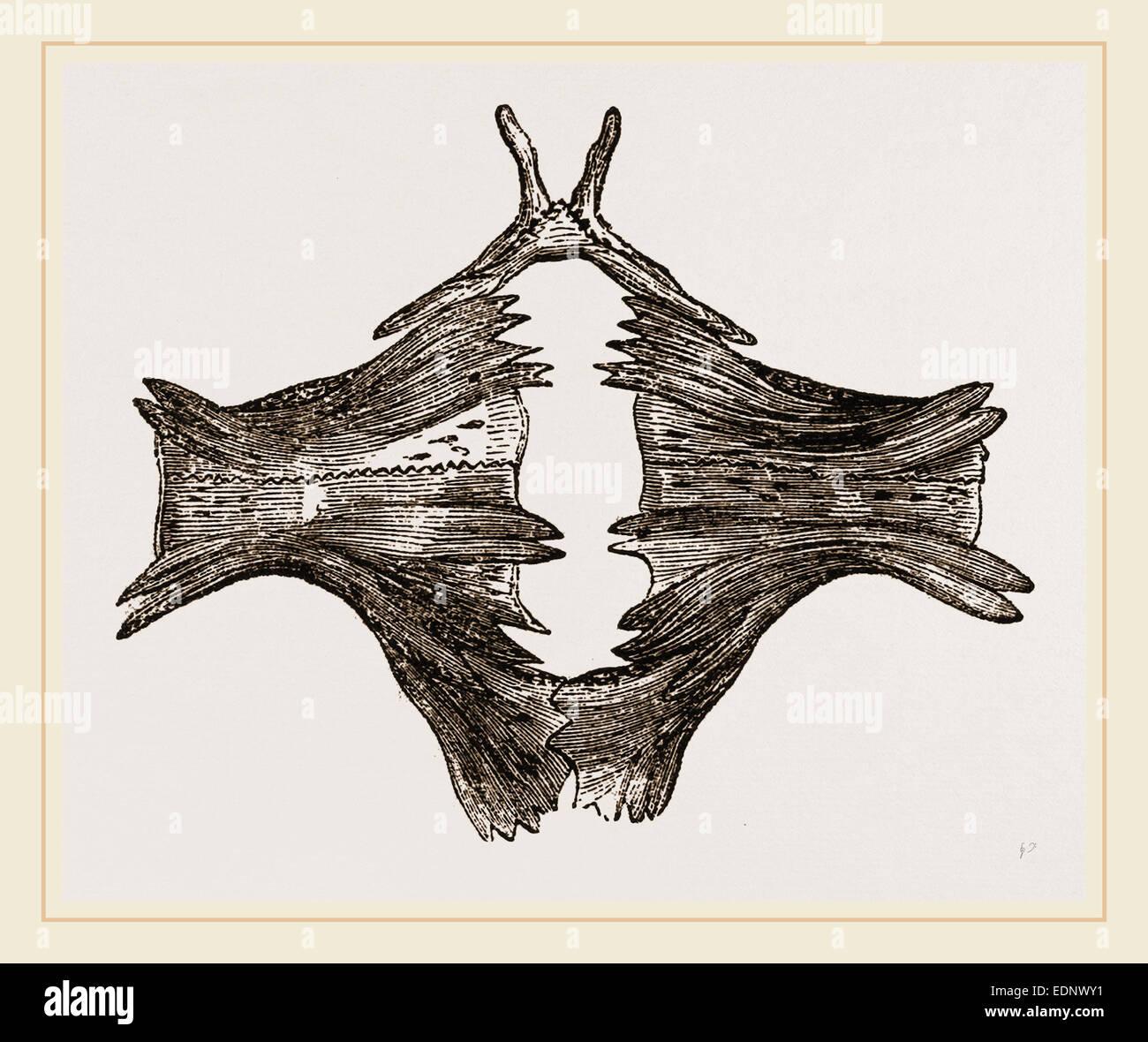 Ziemlich Brustbeins Funktion Galerie - Anatomie Ideen - finotti.info