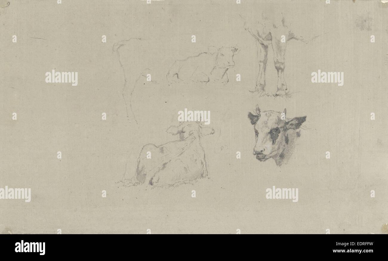 Studien von Kühen, Gerard Bilders, 1848-1865 Stockbild
