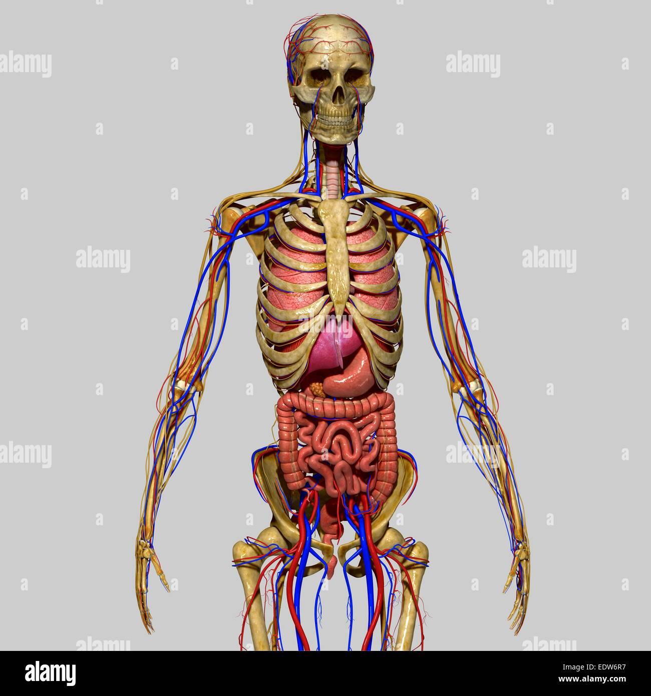 Fantastisch Nervensystem Interaktiv Zeitgenössisch - Menschliche ...
