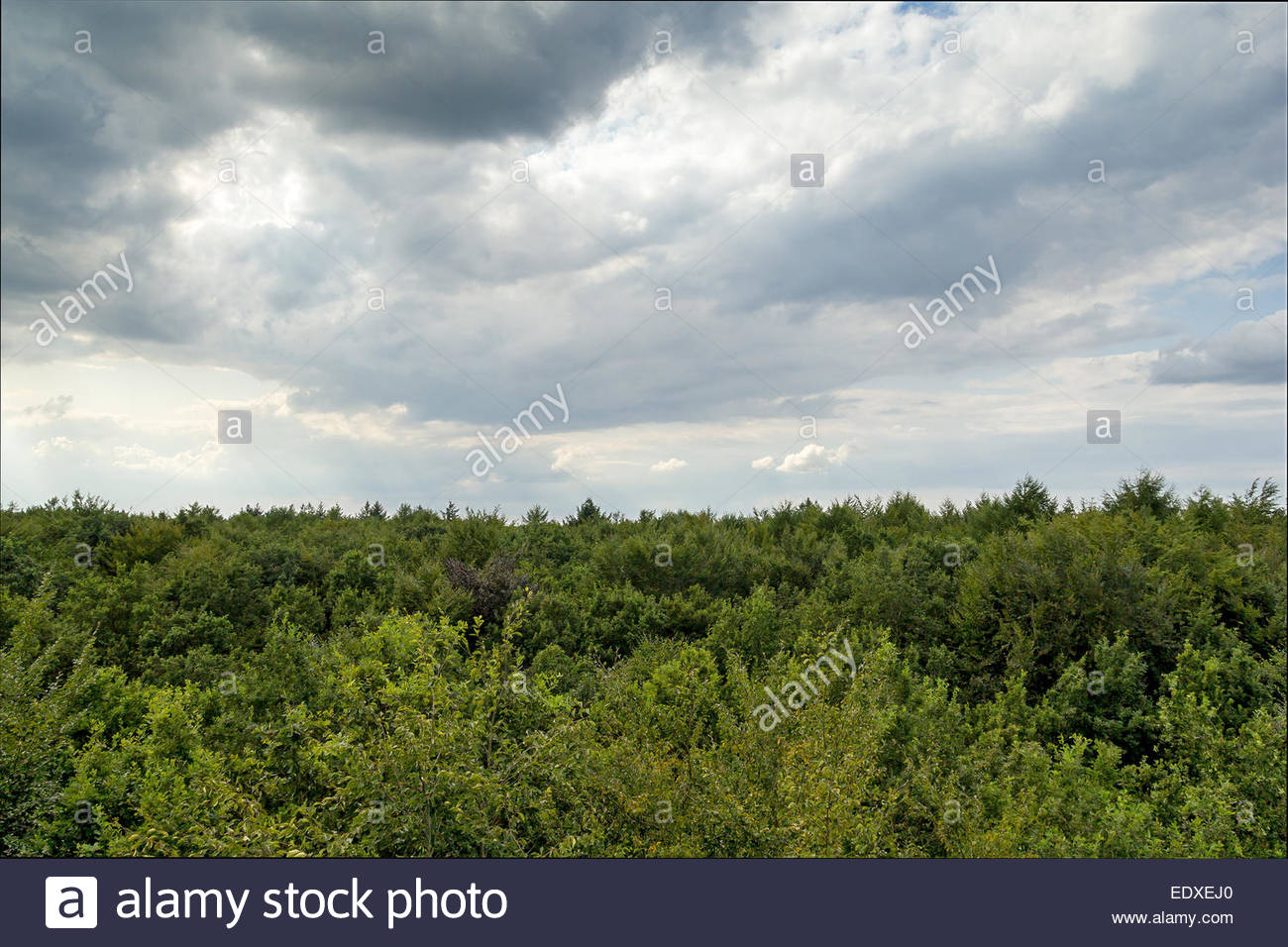 Vogelperspektive Blick auf Baumkronen in einem Wald bei bewölktem Himmel. Stockbild