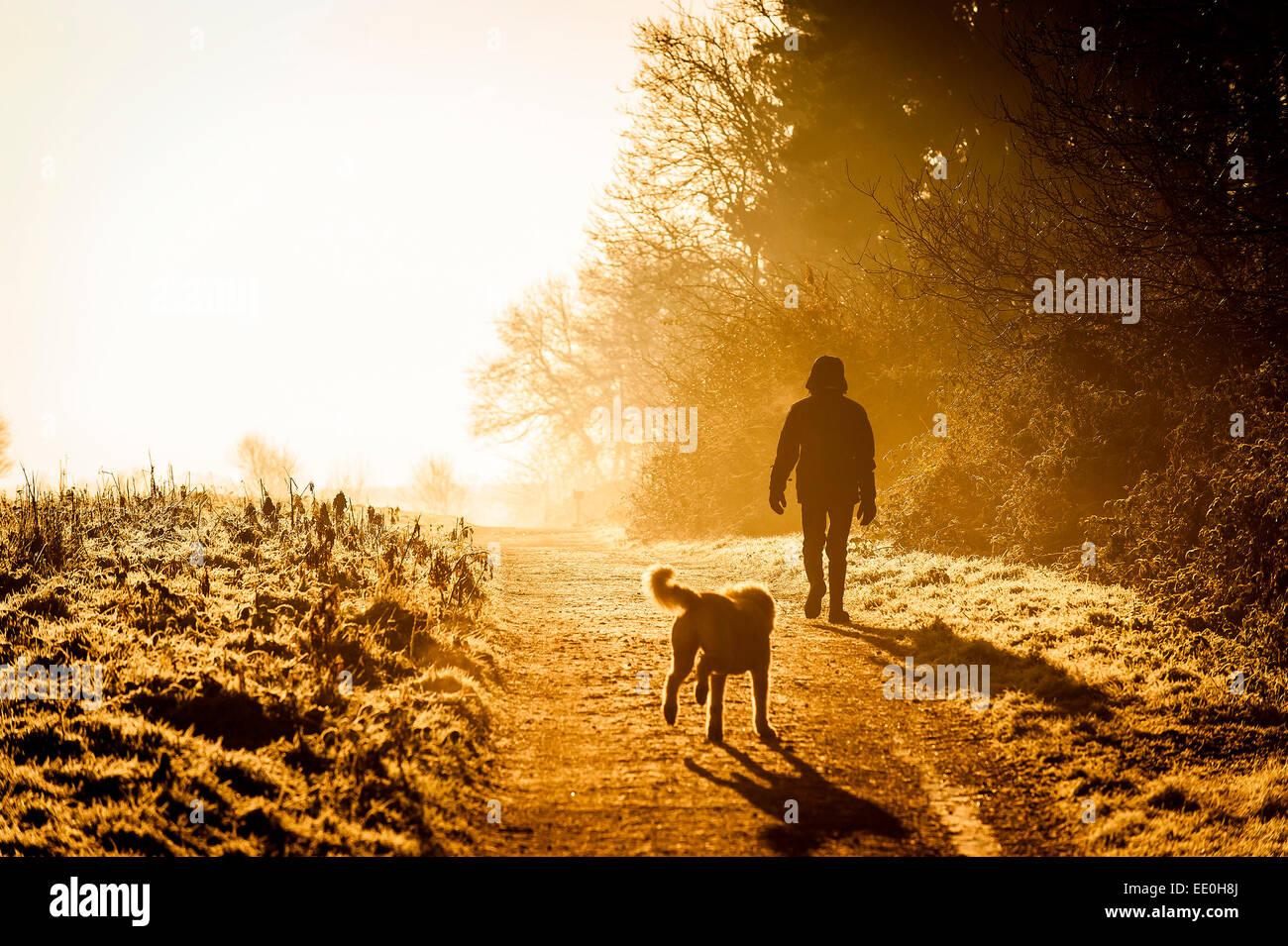 Ein Mann, der seinen Hund in die intensiven Sonnenstrahlen eines frühen Morgens Sonnenaufgang in Thorndon Park Stockbild