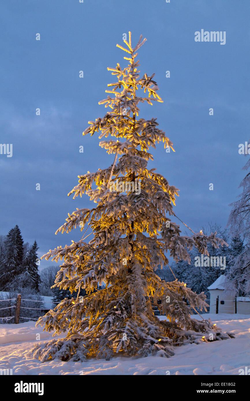 Beleuchteter Weihnachtsbaum Stockfotos & Beleuchteter Weihnachtsbaum ...