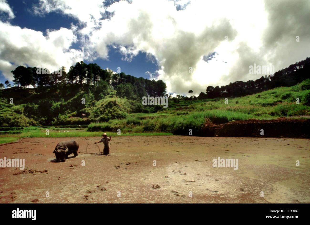 Reis-Terrassen. Sagada. Cordillera Central. Luzon. Philippinen. Von Banaue fahren Sie weiter, Sagada (per Jeepney) Stockbild