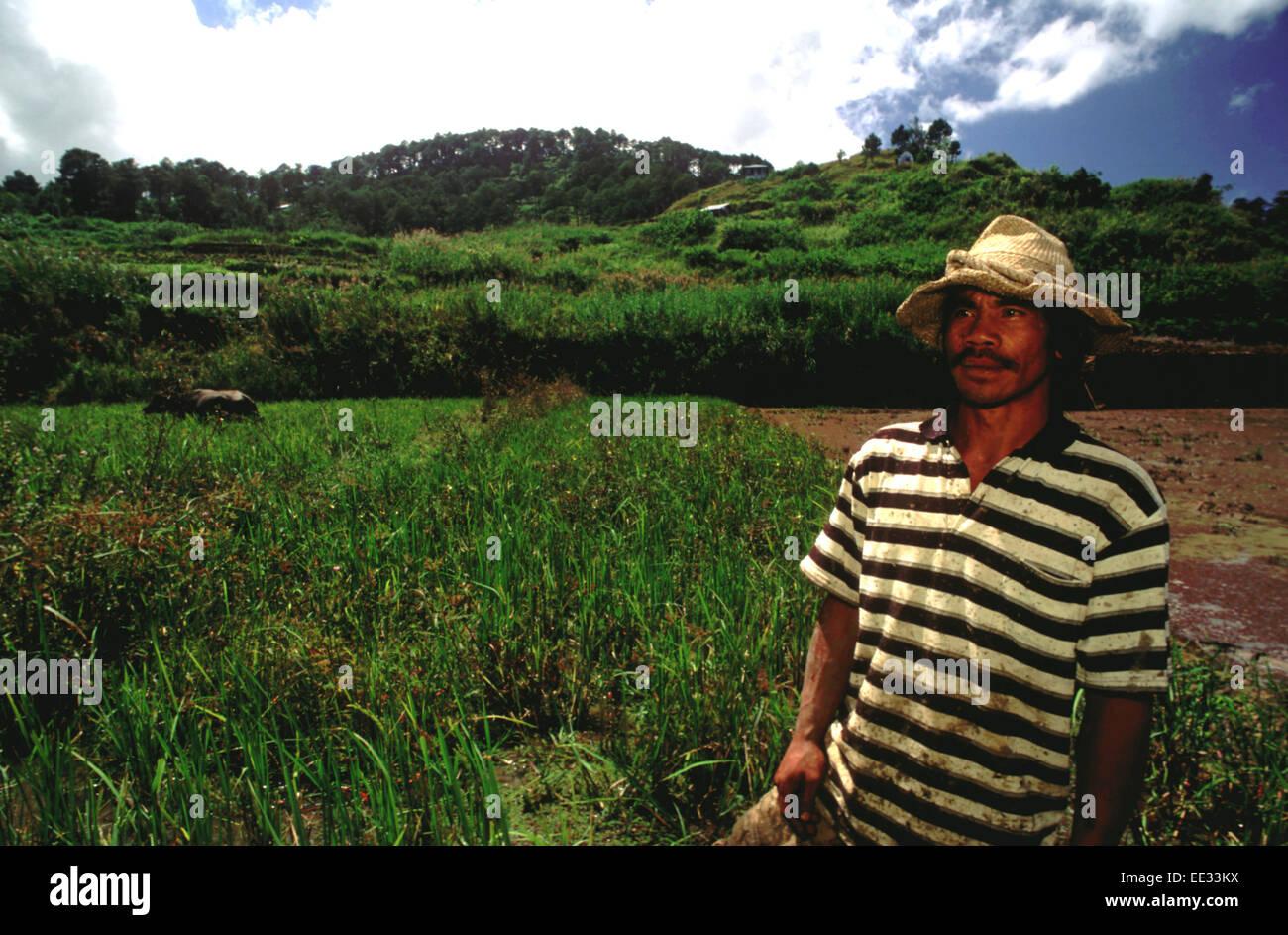 Landwirt. Reisfelder. Sagada. Cordillera Central. Luzon. Von Banaue fahren Sie weiter, Sagada (per Jeepney) oder Stockbild