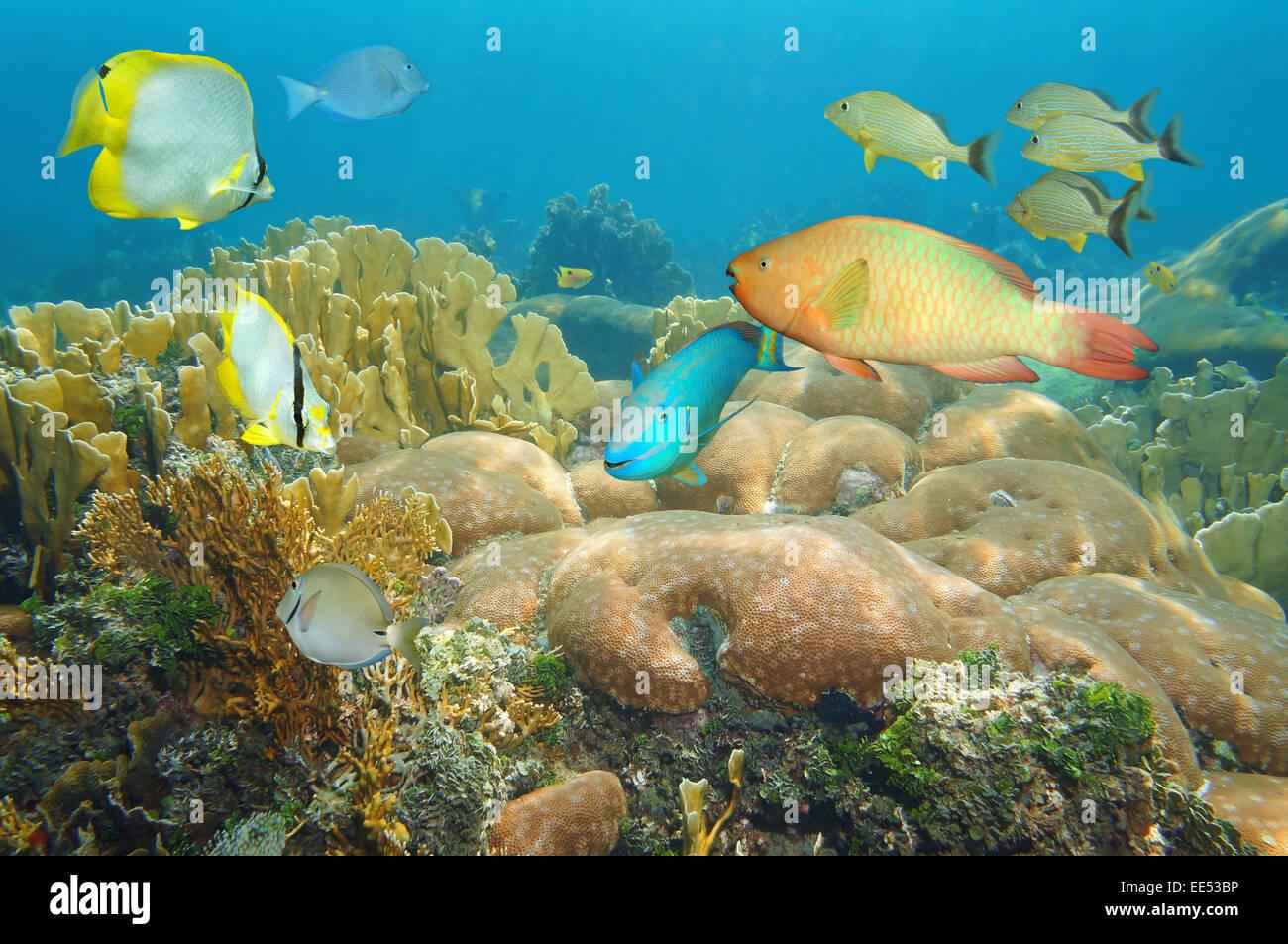 Korallenriff mit bunten Fischen unter dem Meer, Caribbean Stockbild