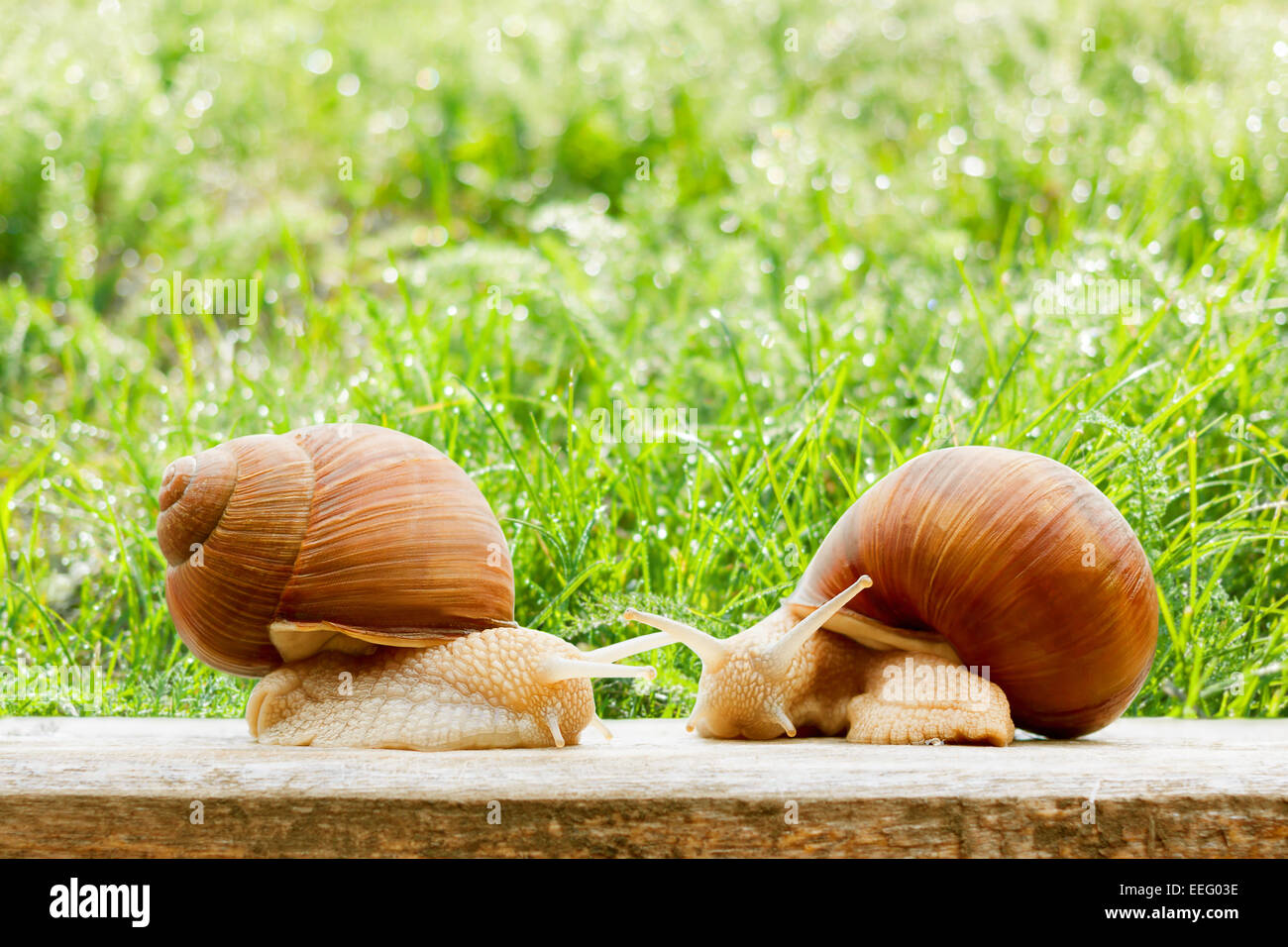 snails stockfotos snails bilder alamy. Black Bedroom Furniture Sets. Home Design Ideas