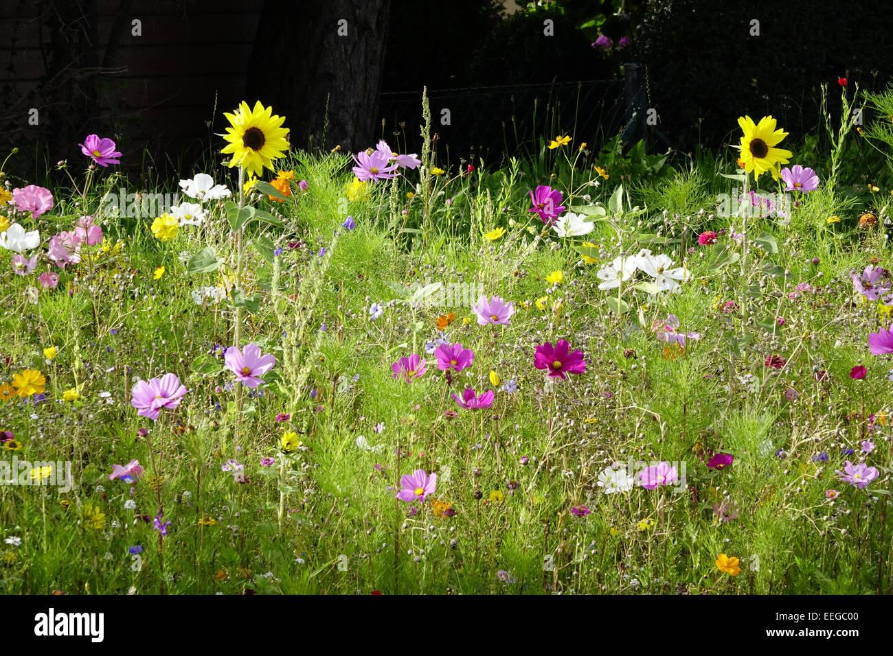bunte blumenwiese im sommer bunte blumenwiese im sommer au en wildblumen wildblumen wiesen. Black Bedroom Furniture Sets. Home Design Ideas