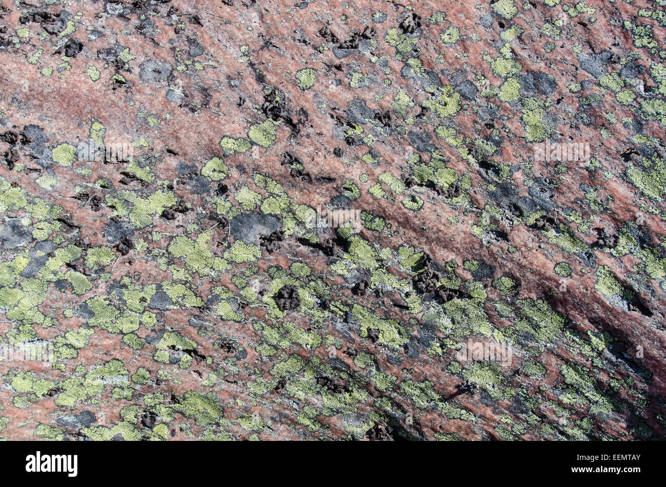 Flechten auf einem Felsen Finnskogen, Hedmark Fylke, Norwegen, April 2012 Stockbild