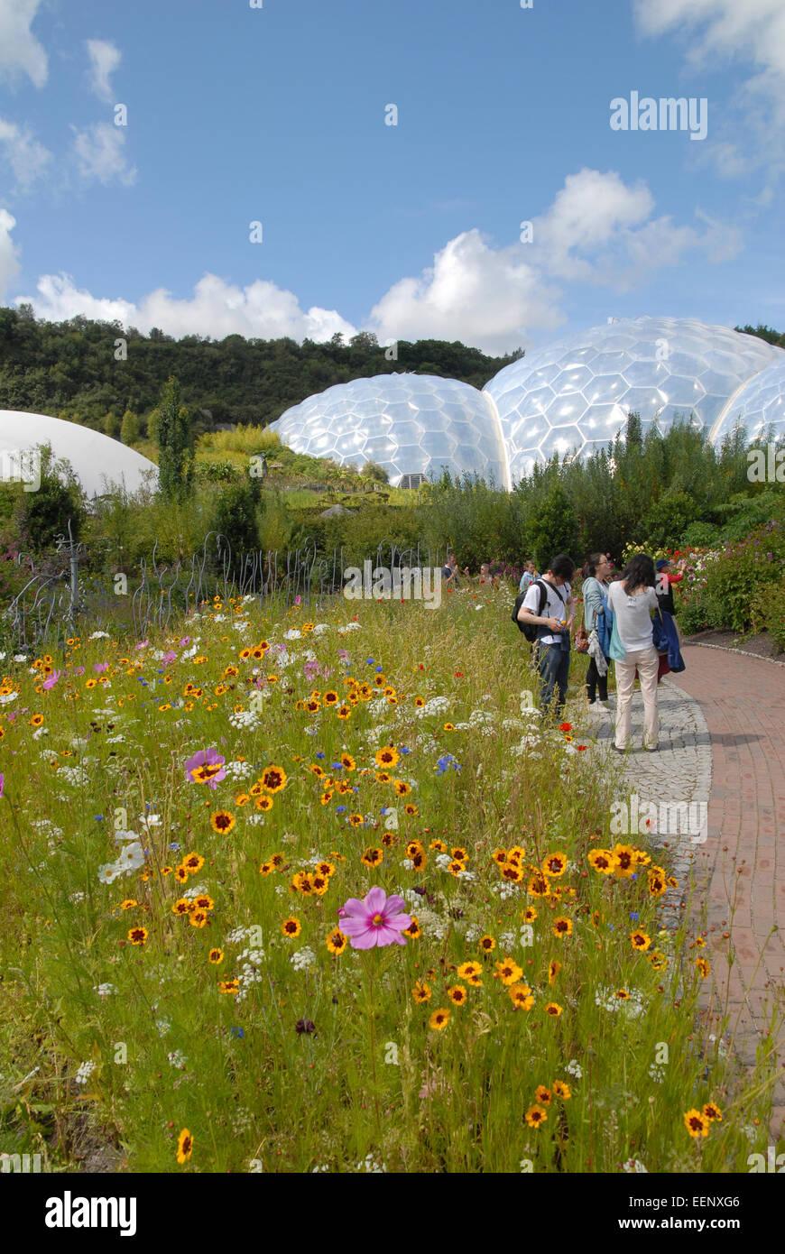 Eden Project, Cornwall, UK.  Außen gedreht zeigt Besuchern und informellen einschließlich Kosmos und Rudbeckia Stockbild