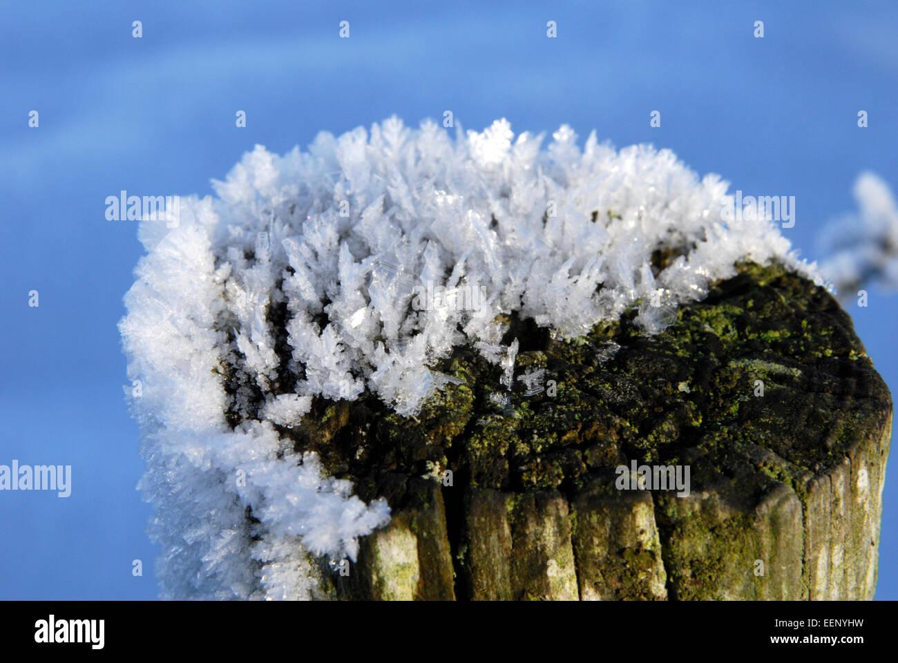 Schneeflocken ließ sich auf einen Zaunpfahl bei kaltem Wetter im winter Stockbild