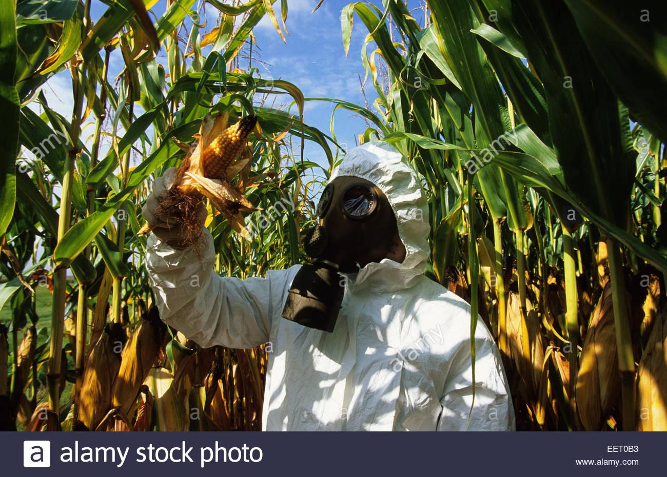 Trans genical Landwirtschaft. Stockbild