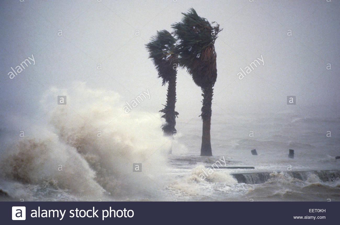 Wellen und Palmen, Hurrikan Hugo, Galveston, Texas, USA. Stockbild